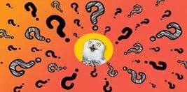 Soru ve Cevap